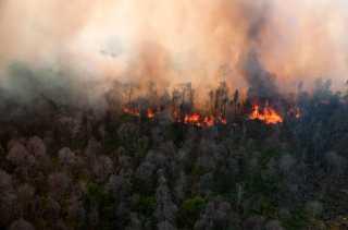Luas Lahan Terbakar di Riau Melonjak