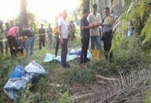 Ditemukan Mayat Mr X Tergelatak di Kebun sawit Simpang Perak, Pelalawan