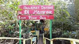 Hutan Mangrove, Daya Tarik Baru bagi Wisatawan di Siak