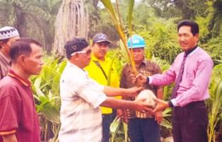 Kembangkan Perkebunan Kelapa Dalam, Disbun Rohil Bagikan 11.750 bibit Geratis
