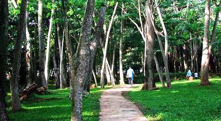 2017 Pemkab Rohil Cadangkan Pembangunan Hutan Kotai