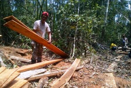 Tersangka Illegal Logging di Hutan Lindung Zamrud Tunggu Sidangi